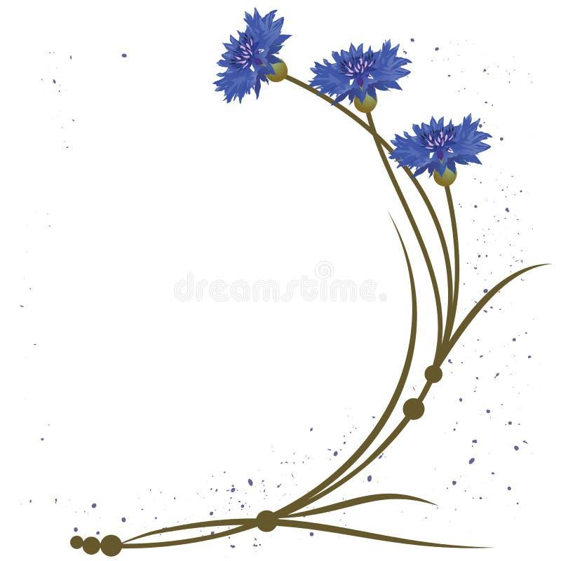 Cornflower ilustração stock