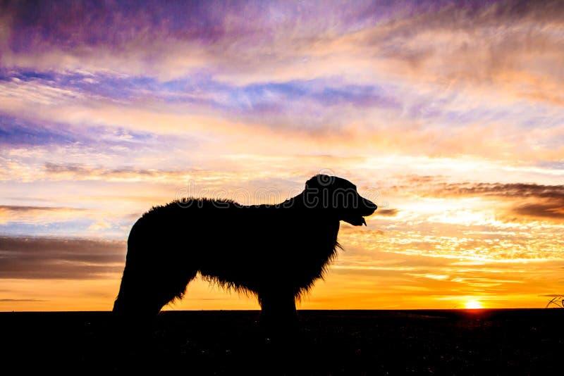 Fundo do vetor do cão silhouette imagens de stock royalty free