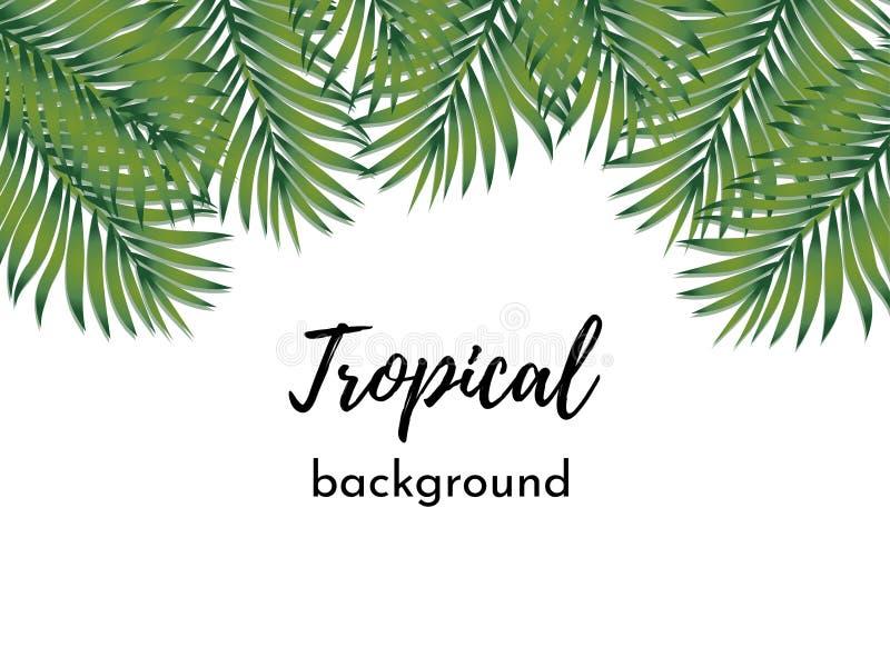 Fundo do vetor Molde com folhas de palmeira tropicais exóticas isoladas do verde do quadro ilustração do vetor