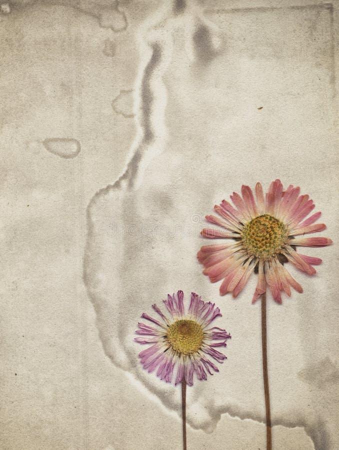 Fundo do vintage com as flores secas na textura de papel velha ilustração stock