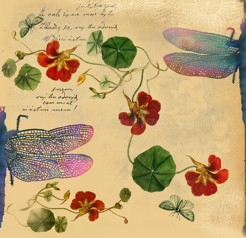 Fundo do vintage com ilustração da libélula ilustração do vetor