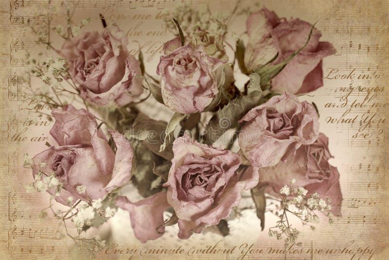 fundo do vintage com rosas secadas imagens de stock