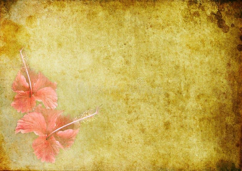 Fundo do vintage com um hibiskus ilustração stock