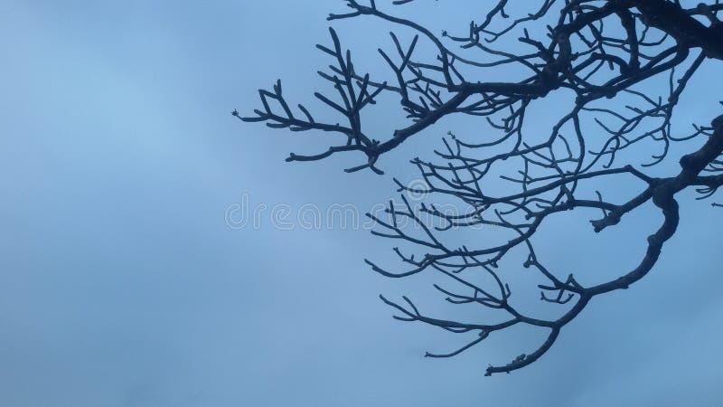 Fundo dos azul-céu com ramo de árvore inoperante fotos de stock