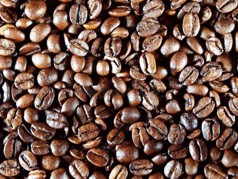 Fundo dos feijões de café. imagens de stock