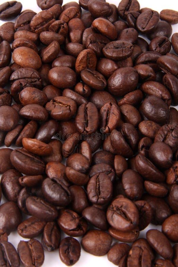 Fundo dos feijões de café no branco foto de stock