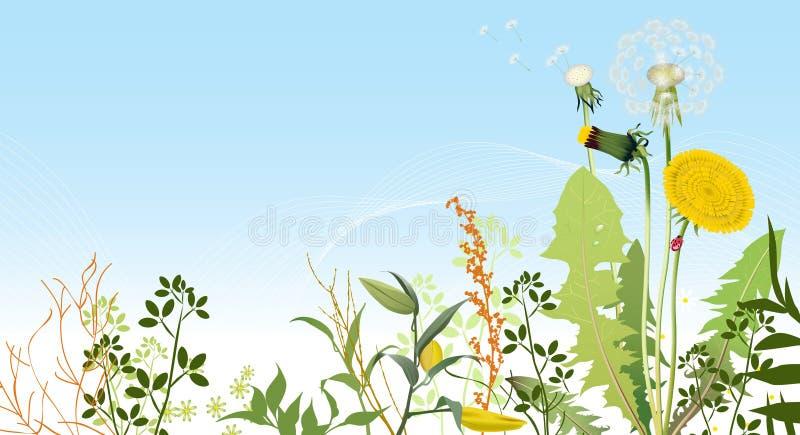 Fundo dos prados da mola. ilustração do vetor