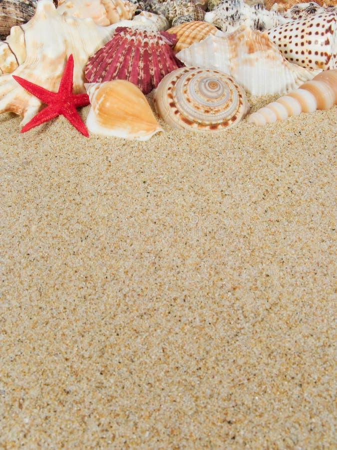 Fundo dos Seashells foto de stock royalty free