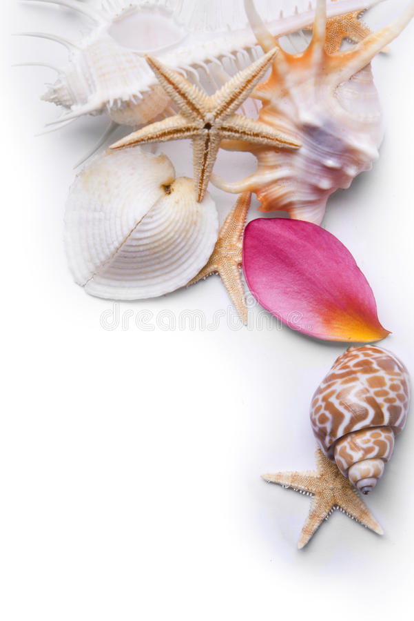 Fundo dos Starfish e da pétala