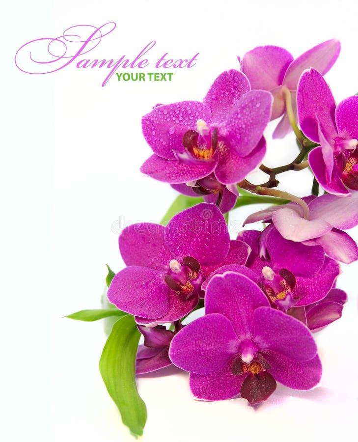 Download Fundo dos termas imagem de stock. Imagem de beleza, perfumado - 26502259