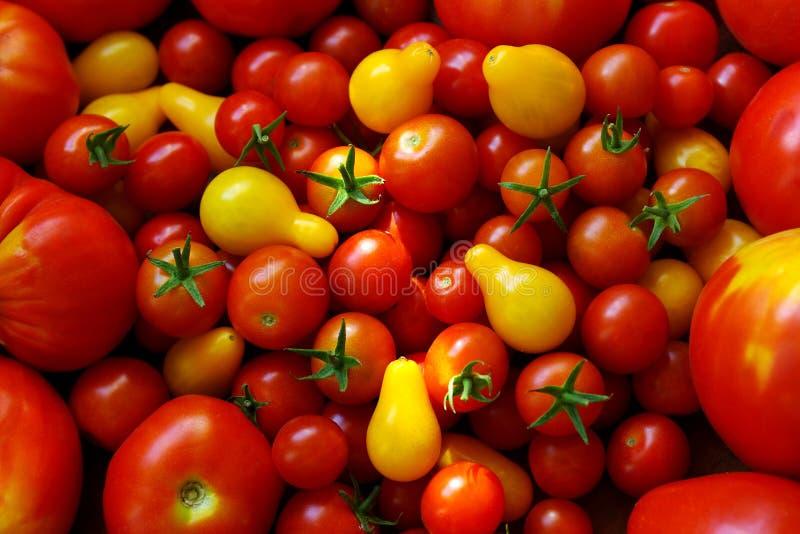 Fundo dos tomates fotografia de stock royalty free
