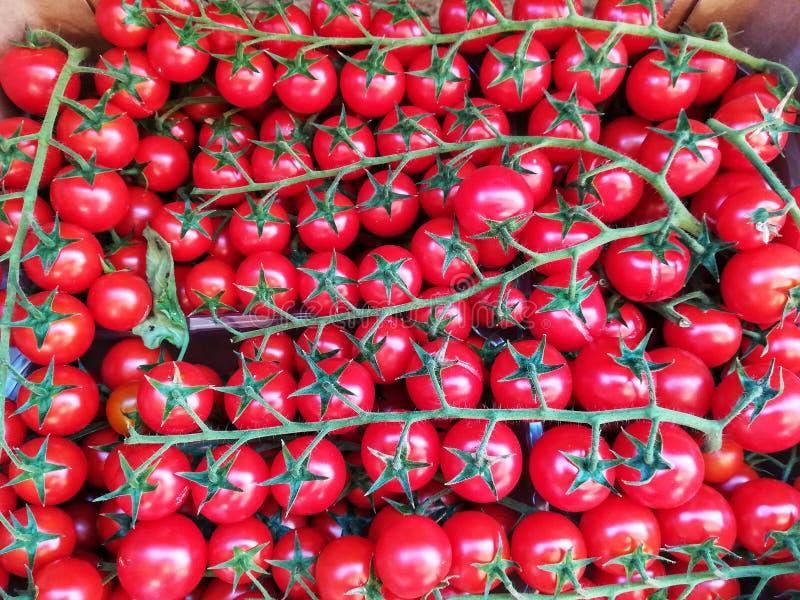 Fundo dos tomates de cereja imagem de stock royalty free