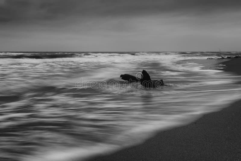 Fundo dramático da natureza - ondas grandes e rocha escura no mar tormentoso, clima de tempestade Cena dramática imagem de stock royalty free