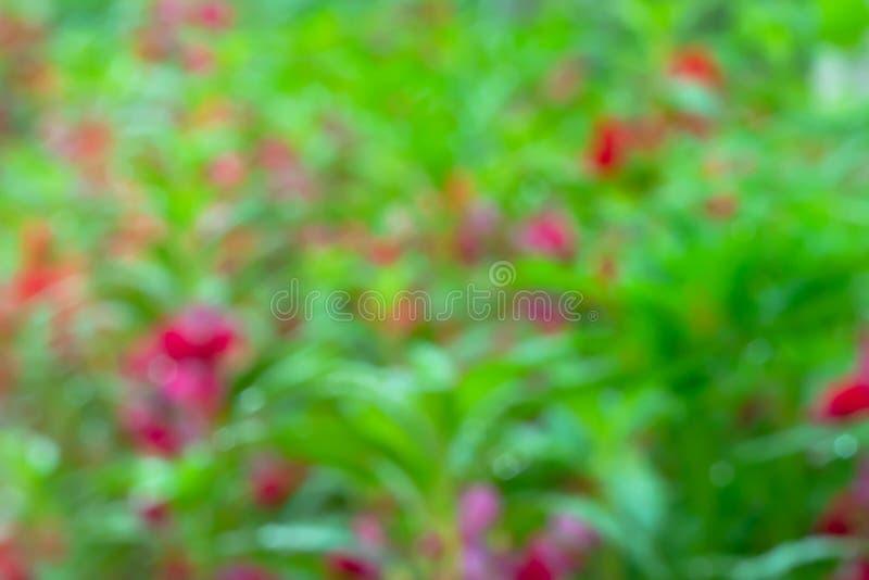 Fundo e textura abstratos da flor imagem de stock