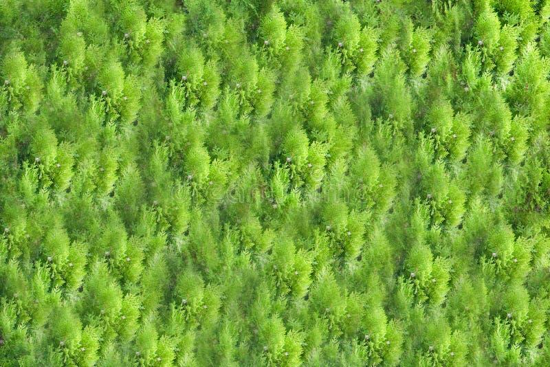 Fundo e textura da grama verde, de árvores ou do teste padrão bonito das plantas foto de stock royalty free