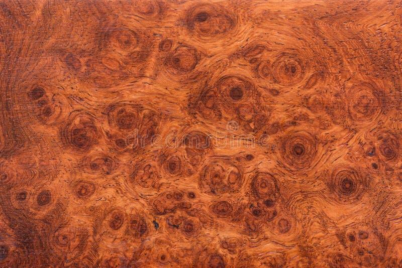 Fundo e textura da madeira macro do Ormosia foto de stock royalty free