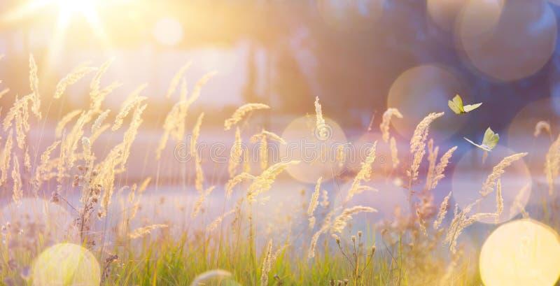 Fundo ensolarado abstrato do prado do outono de setembro da arte fotos de stock