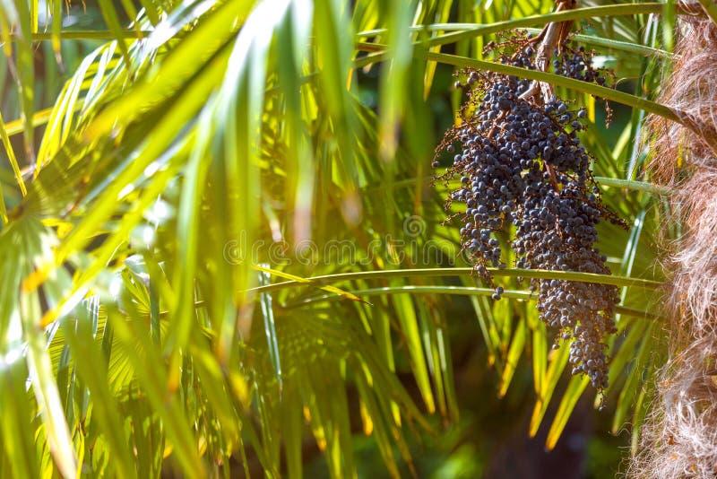 Fundo ensolarado da palmeira fotografia de stock royalty free