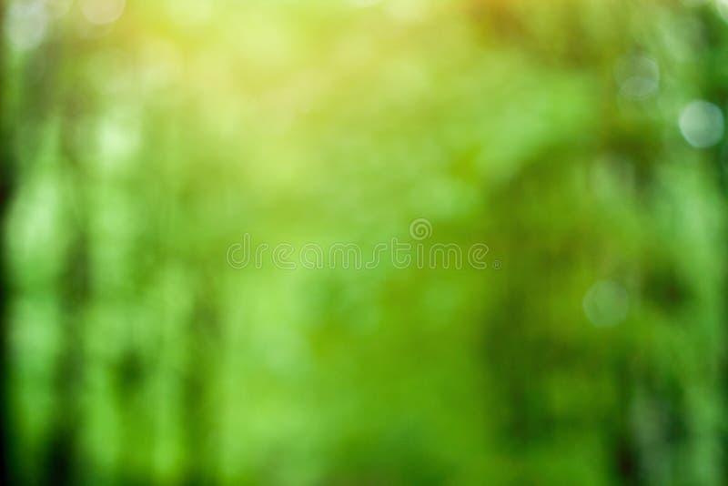 Fundo ensolarado verde borrado da floresta imagem de stock royalty free