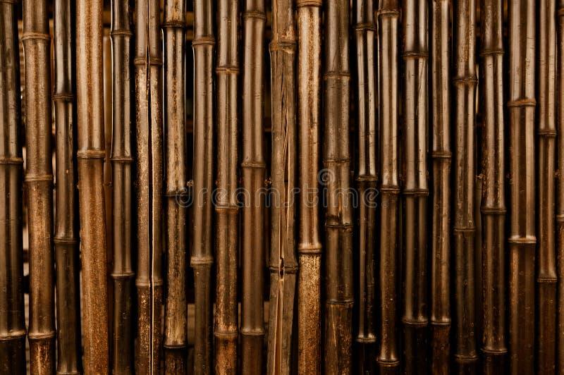 Fundo escuro de bambu fotos de stock