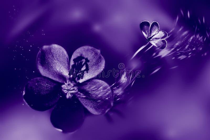 Fundo fasionable natural ultravioleta Flores e borboleta no movimento imagens de stock