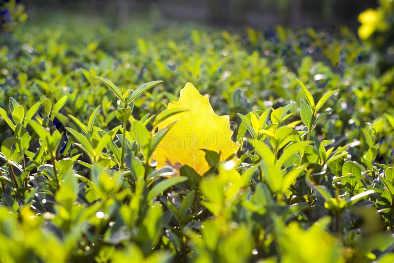 Fundo feito das folhas caídas e do assoalho de madeira na queda utum Chave fria recolhida foto foto de stock royalty free