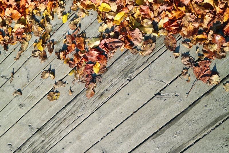 Fundo feito das folhas de bordo caídas e do assoalho de madeira na queda imagens de stock