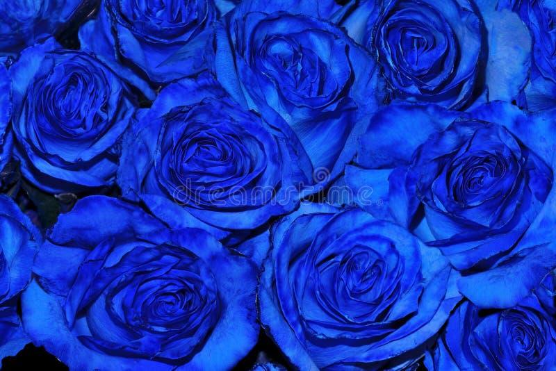 Fundo festivo floral bonito do explorador de saída de quadriculação fresco de florescência do azul foto de stock royalty free