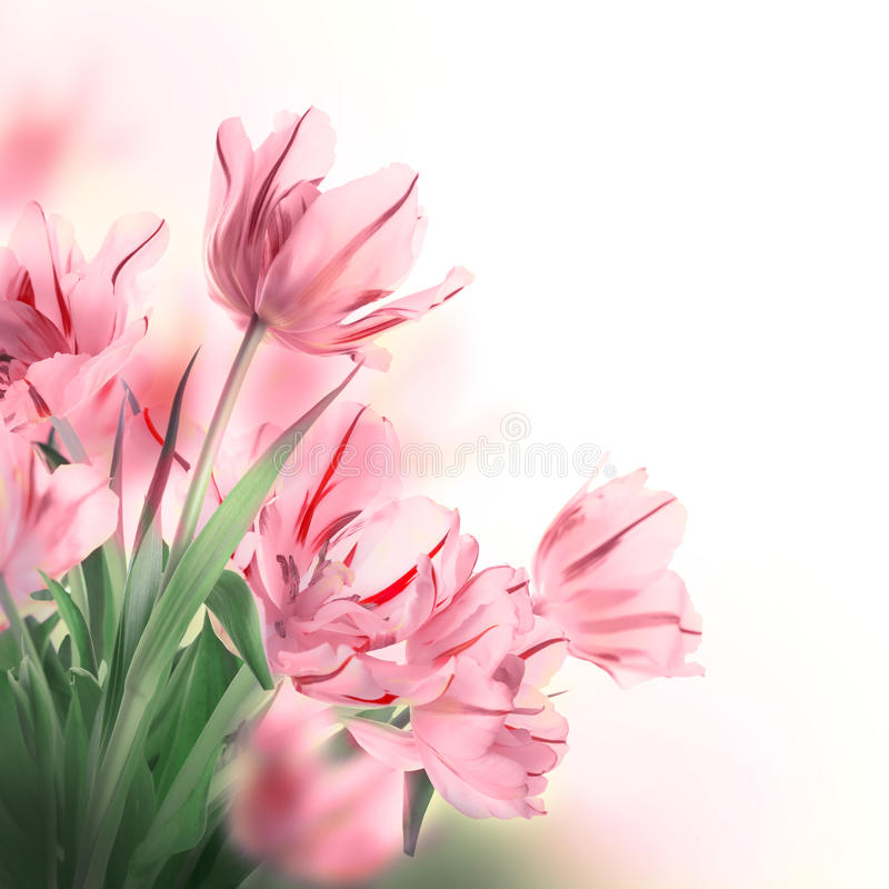 Fundo floral. imagens de stock