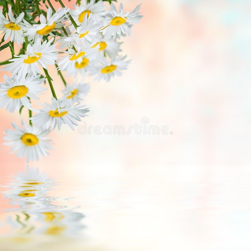 Fundo floral 24 fotos de stock royalty free