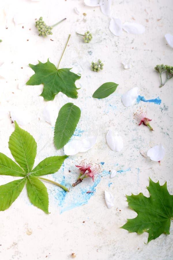 Fundo floral abstrato no estilo do vintage flores no fundo velho da aquarela fotografia de stock