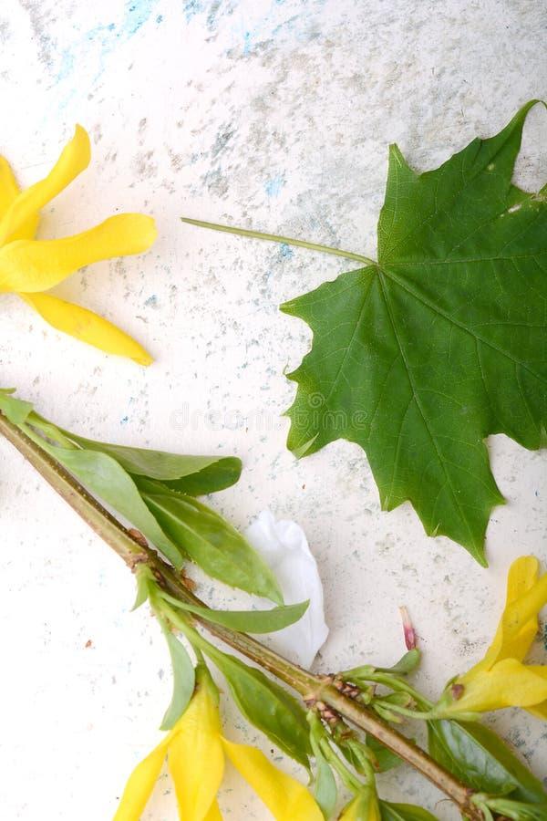Fundo floral abstrato no estilo do vintage flores no fundo velho da aquarela imagem de stock