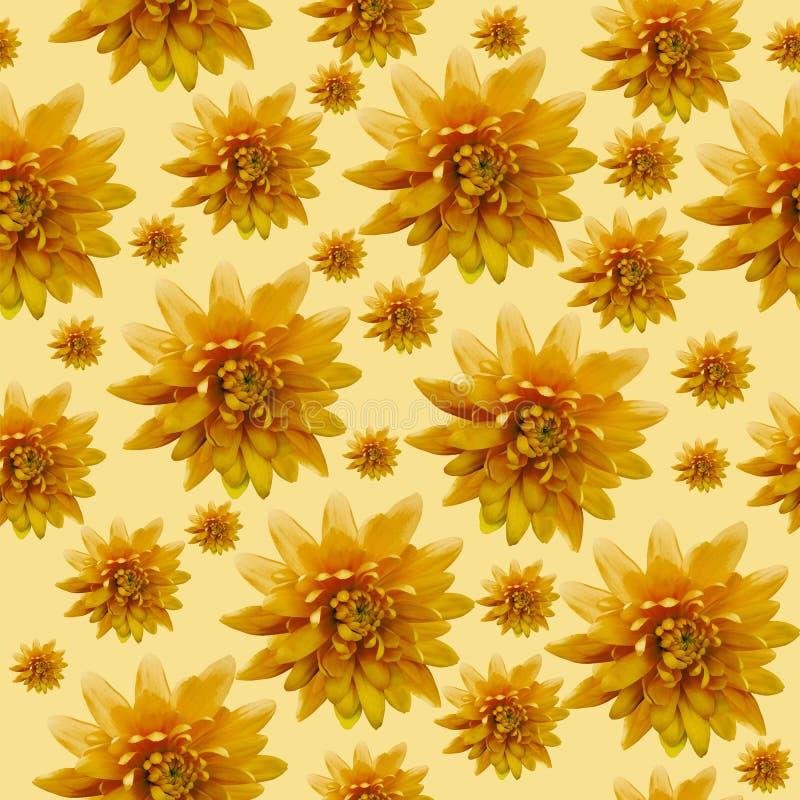 Fundo floral alaranjado infinito sem emenda para o projeto e a impressão Fundo de crisântemos naturais fotos de stock royalty free