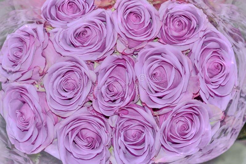 Fundo floral bonito com clo de florescência das rosas frescas da violeta imagem de stock