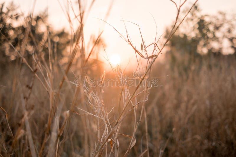 Fundo floral bonito do sumário da mola da natureza Ramos do macro de florescência com foco macio no bokeh claro delicado do borrã fotos de stock royalty free