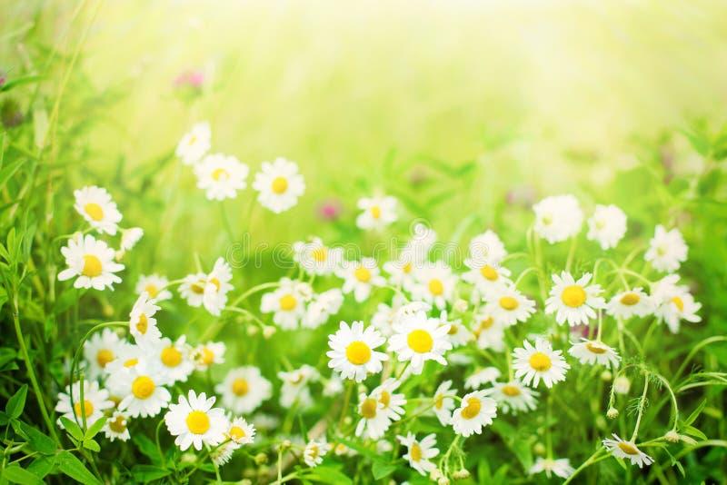 Fundo floral borrado do verão da natureza imagens de stock royalty free