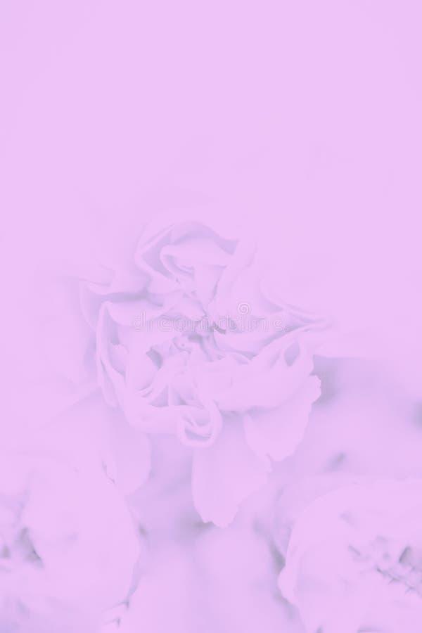 Fundo floral cinzento cor-de-rosa pastel macio Copie o espa?o fotografia de stock