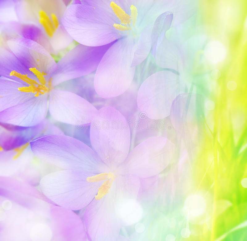 Fundo floral colorido fotos de stock
