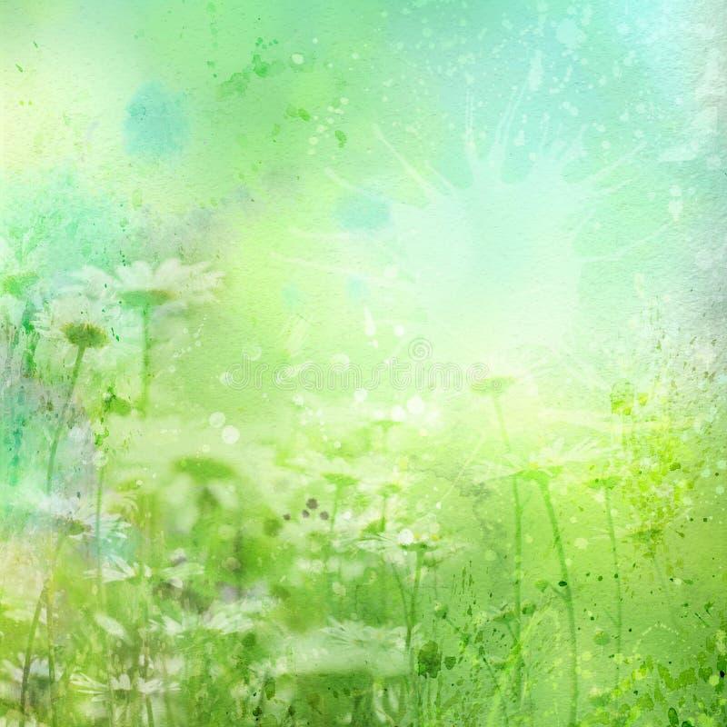 Fundo floral com camomila da aguarela ilustração do vetor