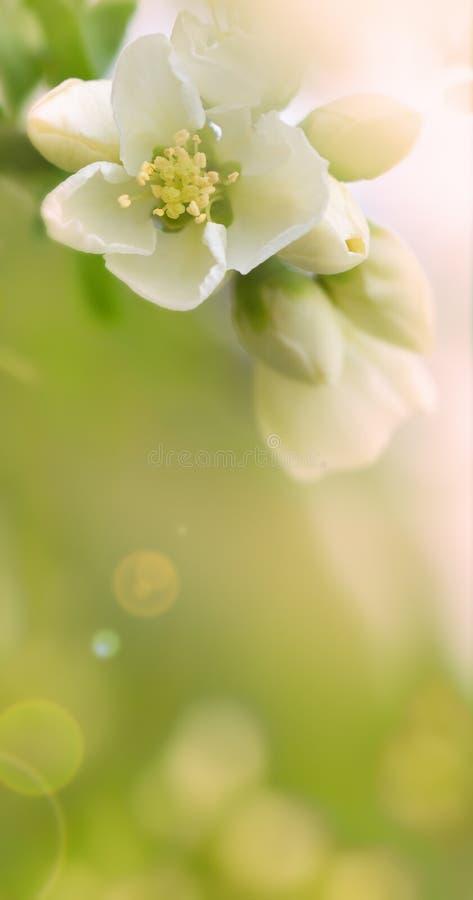 Fundo floral com espaço da cópia imagens de stock royalty free