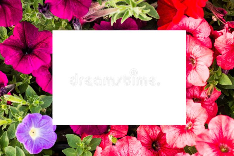 Fundo floral com uma forma retangular branco-colorido Modelo Quadro retangular bonito com flores e folhas ver?o foto de stock