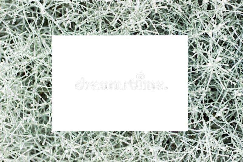 Fundo floral com uma forma retangular branco-colorido Modelo Quadro retangular bonito com flores e folhas ver?o imagem de stock