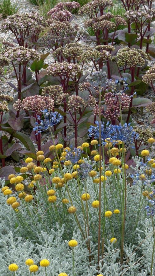 Fundo floral da flor Garden fotos de stock royalty free
