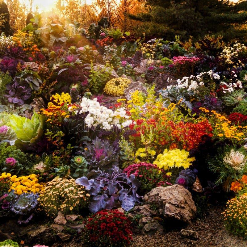 Fundo floral da flor Garden imagem de stock
