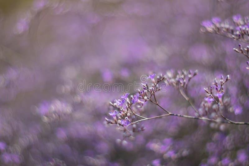 Fundo floral da mola macia da natureza fotografia de stock royalty free