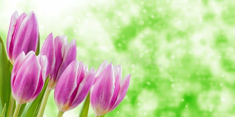 Fundo floral da natureza do feriado imagens de stock