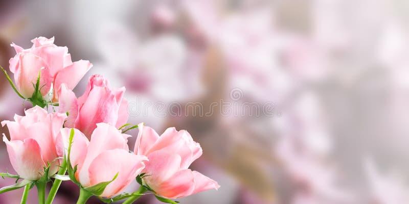 Fundo floral da natureza do feriado fotos de stock