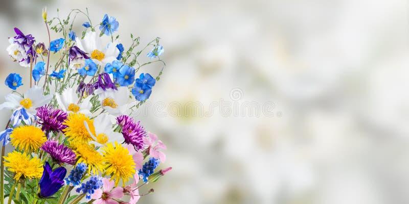 Fundo floral da natureza do feriado fotografia de stock royalty free