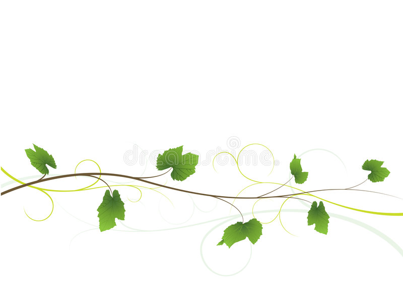 Fundo floral da videira ilustração do vetor