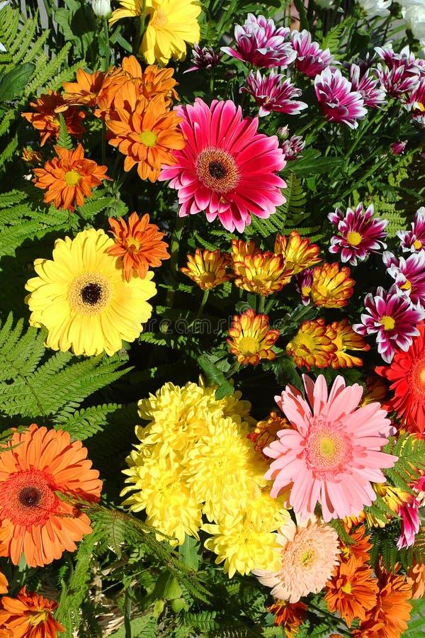 Fundo floral de cores brilhantes do outono imagem de stock